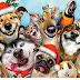 Christmas Bazaar...