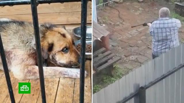В упор: россиянин 15 раз выстрелил в пса, который сидел на цепи