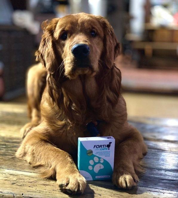 https://www.notasrosas.com/Nexentia, de Corona lanza al mercado 'Forticaps Caninos'