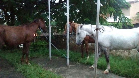 Guarda Civil de Salto de Pirapora e PM detém três elementos por furto de cavalos