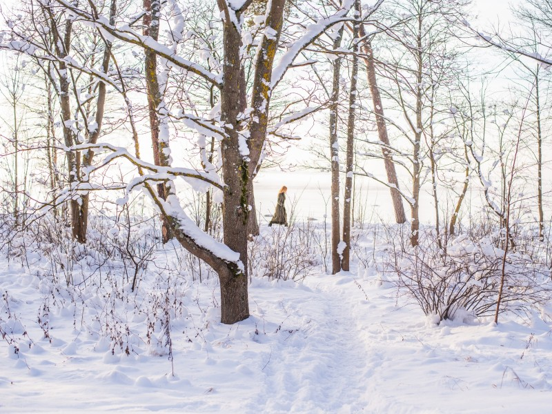Download Trees during Snow HD wallpaper. Click Visit page Button for More Images.