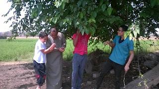 الحسينى محمد , الحسينى , الخوجة , التوت , الشجرة,فوائد التوت , #الخوجة , #الحسينى محمد