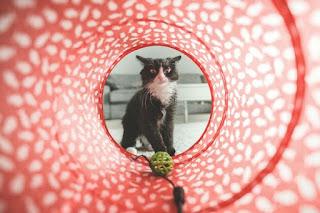 Cara Membuat Mainan Kucing dari Kertas