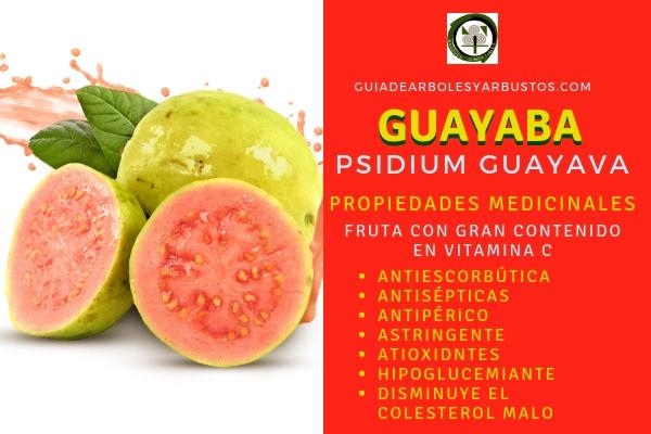 La guayaba tiene propiedades antioxidantes, antiescorbúticas, antisépticas