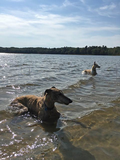 retired racing greyhounds, Beaver Island, Font Lake, vacation, Anne Butera, My Giant Strawberry