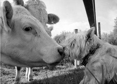 Yulin Dog Meat Festival