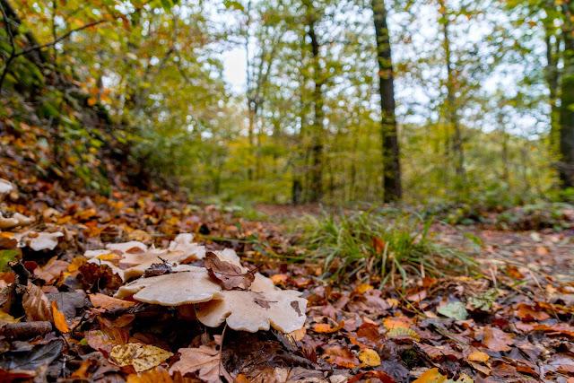 Wildwiesenweg – Eitorf | Wandern in der Naturregion-Sieg | Erlebniswege Sieg 11
