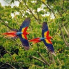 Birds Flying In Tropical Rainforests