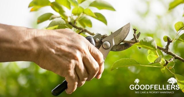 http://goodfellers.ie/tree-pruning/