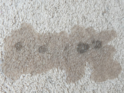 How To Easily Remove Stains From Carpet Without