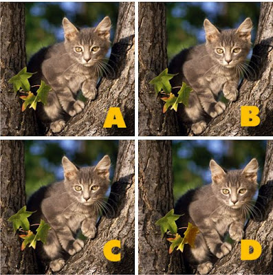 Which image is different? image 18