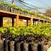 Rondônia se tornou o terceiro maior produtor de Cacau do Brasil