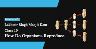 Solutions of How do Organisms Reproduce? Lakhmir Singh Manjit Kaur VSAQ, and SAQ Pg No. 141 Class 10 Biology
