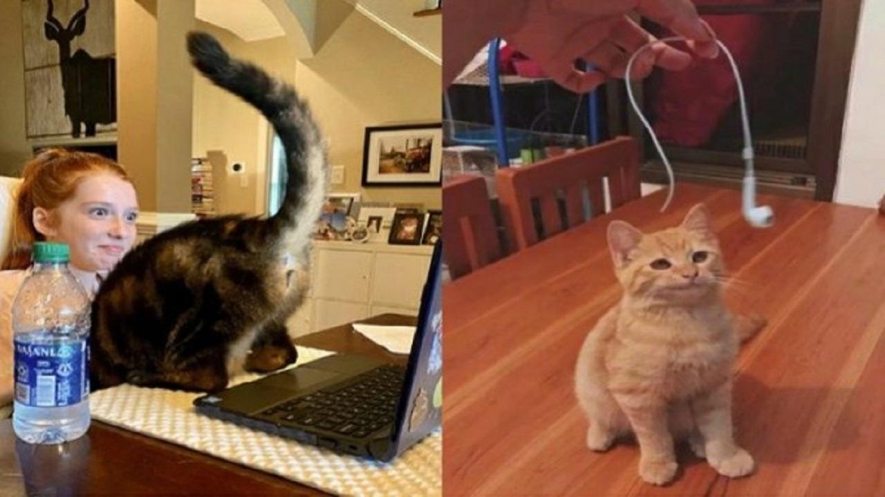 10 Foto Lucu Tingkah Usil Kucing, Bikin Emosi tapi Tetap Ngakak