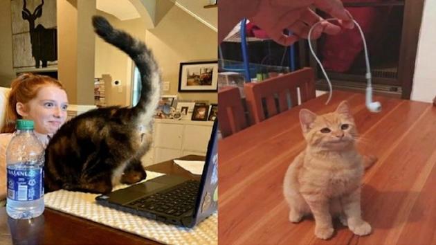 10 Foto Lucu Tingkah Usil Kucing: Gak Cuma Ngerusuh, Kucing Juga Kerap Bertingkah Usil. Contohnya Seperti pada Sepuluh Foto Lucu ini. Dijamin Bikin Emosi Tapi Tetap Ngakak Juga. Yuk, ditengok!