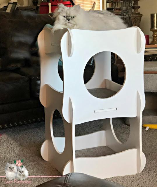 persian cat on top of cat furniture