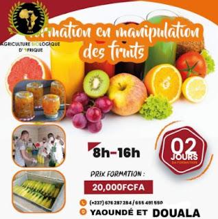 Formation en manipulation des fruits