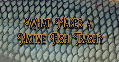 Native Fish, Trash Fish, Rough Fish, Conservation, Protect our Rivers, Protect Texas Rivers, Texas Fly Fishing, Fly Fishing Texas
