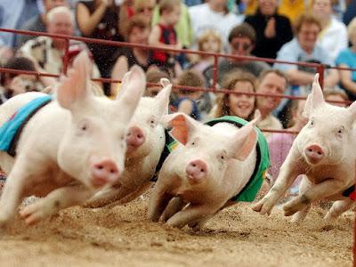 Свинячьи бега