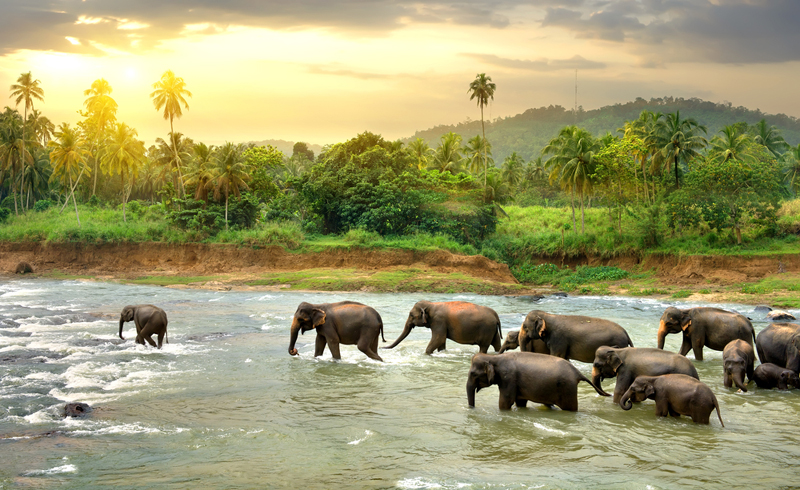 The beautiful Sri Lanka