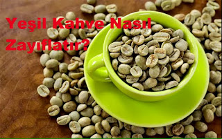 Yeşil Kahve Nasıl Zayıflatır?