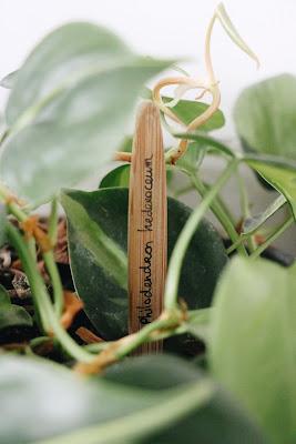 tag à nom de plantes