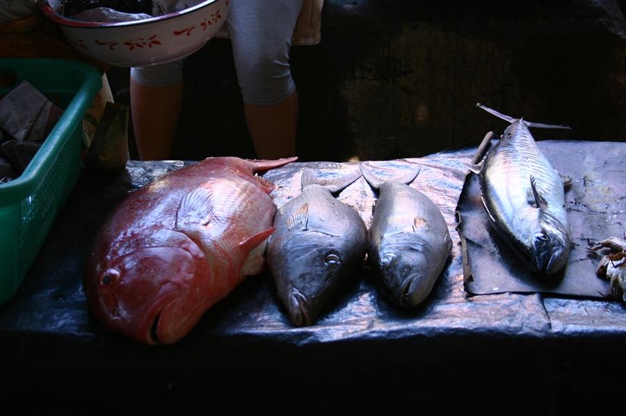 토막 전의 생선