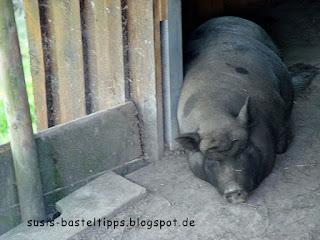 ein faules Schwein: Foto von unabhängiger Stampin' Up! Demonstratorin in Coburg