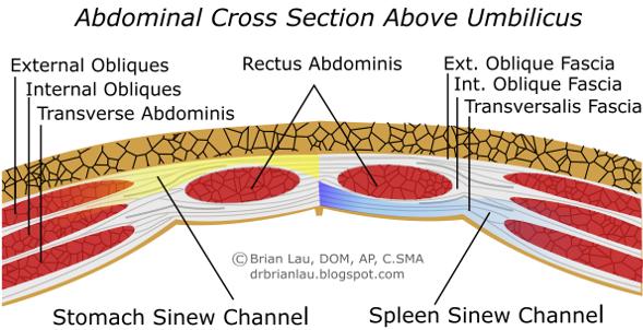Anatomy of the Sinew Channels: The Sinew Channels (Jingjin ...