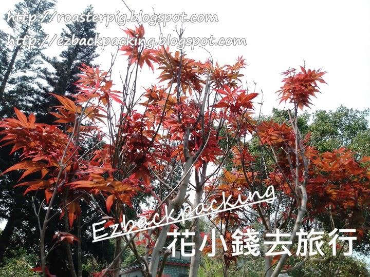 雲泉仙館紅葉