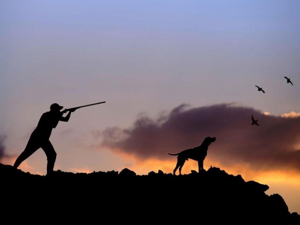 Επιτρέπεται το κυνήγι αγριόχοιρου στην Ξάνθη - Οδηγίες