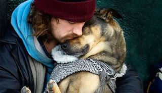 amor aos cães