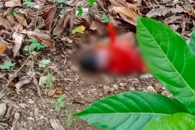 BREAKING NEWS: Warga Passipo Bone Dihebohkan Penemuan Mayat Bayi dalam Kantong Plastik