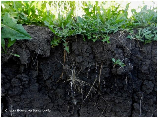 Horizonte de suelo con cubierta vegetal - Chacra Educativa Santa Lucía