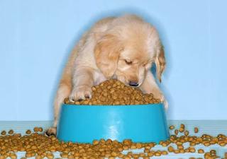 best large breed puppy food, best puppy food brand