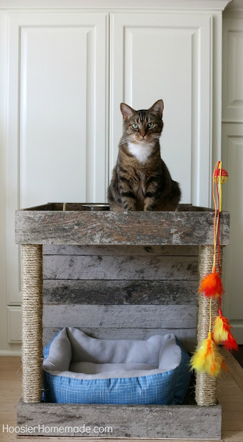 DIY wood pallet cat condo featured at Talk of the Town - KnickofTime.net