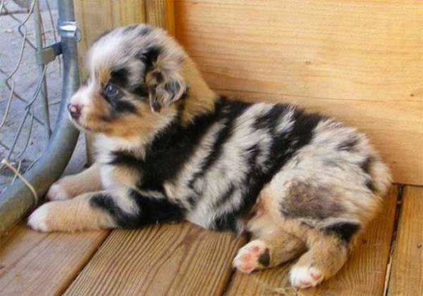 Top 5 Dogs with absolutely amazing fur