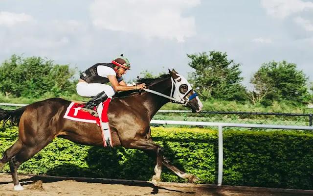 الحصان, الخيل العربي, سباق الخيل, سباق الخيول, الحصان العربي, تكاثر الخيول, شطة نيوز, رقص خيل, خيول للبيع,horse racing, grand national runners, horse racing result, racecards, horse racing today, shatta-news