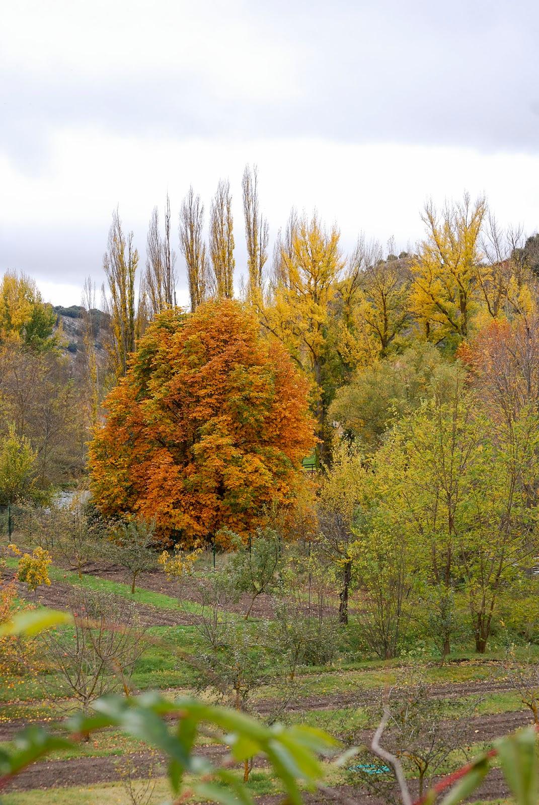soria duero douro river rio spain otoño autumn fall foliage landscape