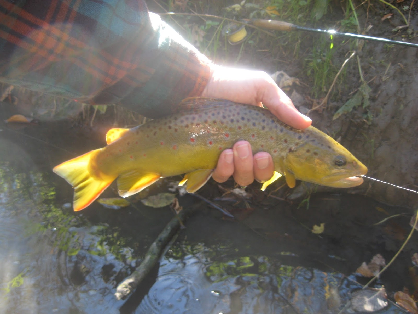 Minnesota driftless fly fishing trip report state park for Driftless fly fishing