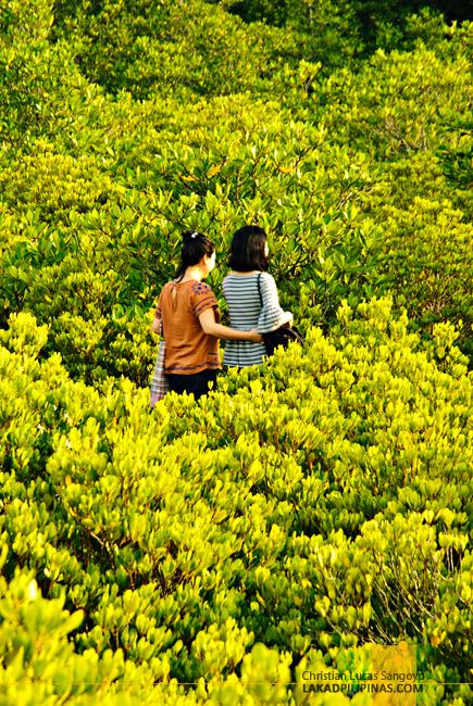 Tung Prong Thong Rayong Thailand
