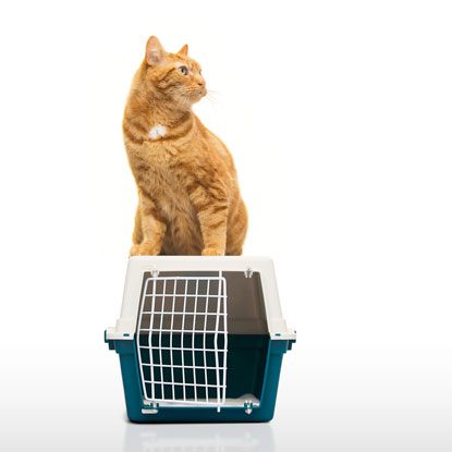 cat and cat carrier