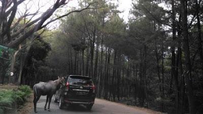 Jenis-satwa-taman-safari-prigen