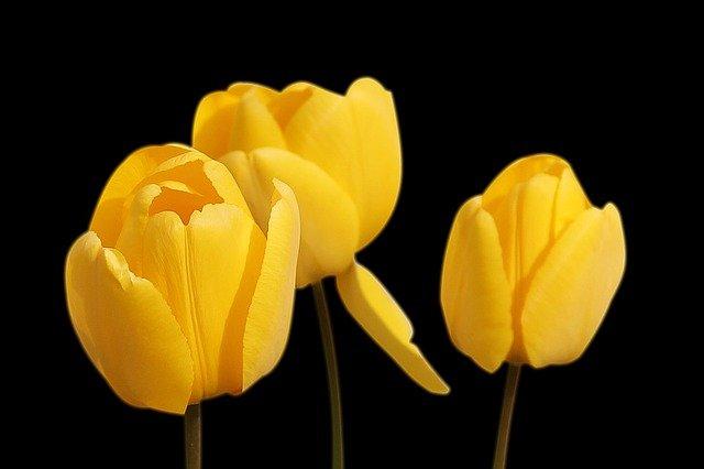 beautiful flower wallpaper download