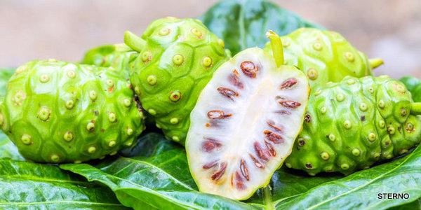 pengobatan herbal diabetes dengan jus mengkudu