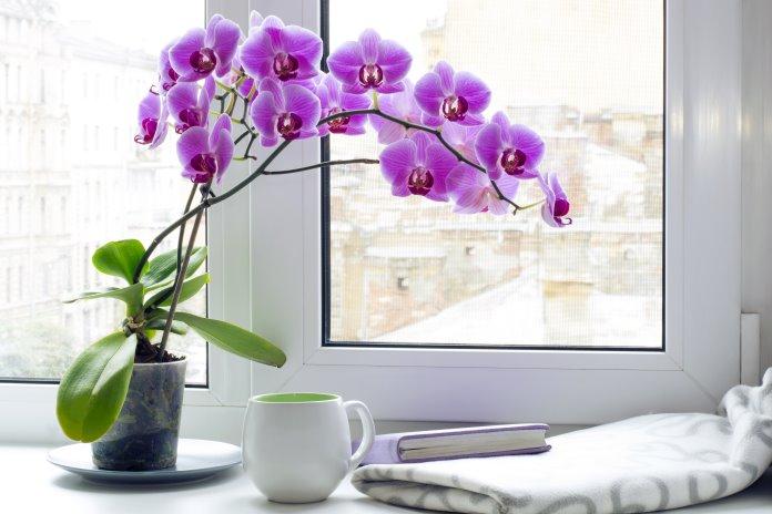 Orkide Bakımında Doğru Işık Nasıl Olmalı?