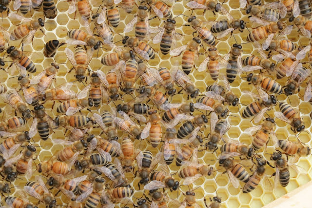 hillcrest mall bees