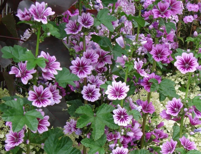 Qual planta você pode usar para espantar moscas, mosquitos, pernilongos e baratas da sua casa?
