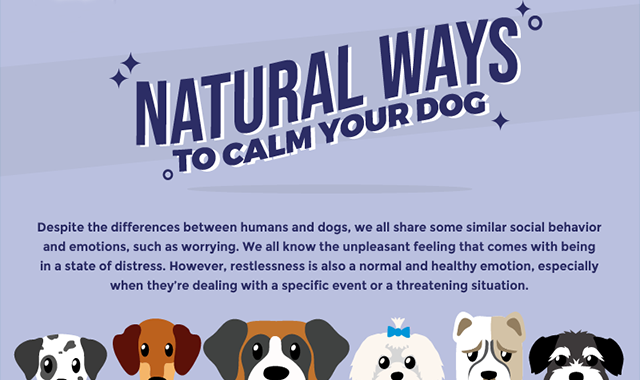 Natural Ways to Calm Your Dog