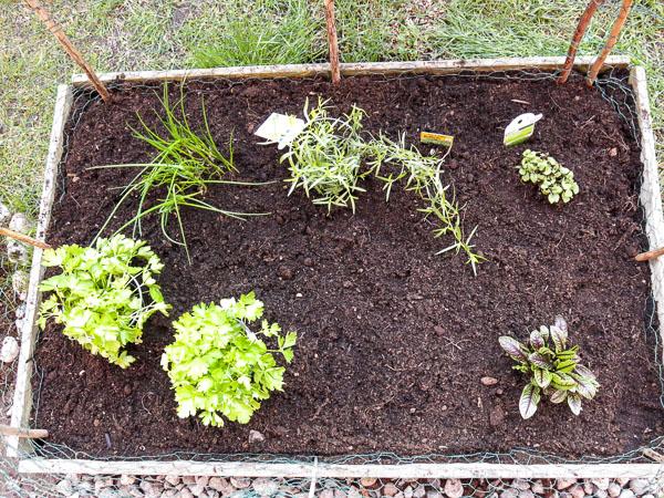 odlingslåda, kryddväxter
